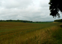 Countryside Nr Stetchworth