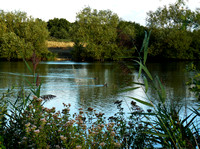 BTO Nunnery Lakes Nature Reserve